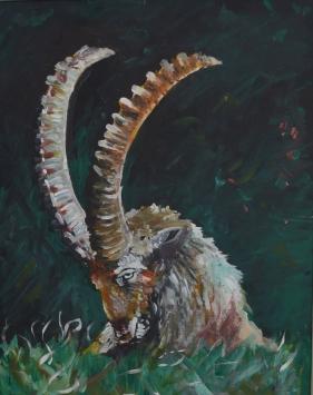 Wild Goat Waking
